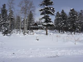 Secluded Lodge Style Home in the Pines - Angel Fire vacation rentals