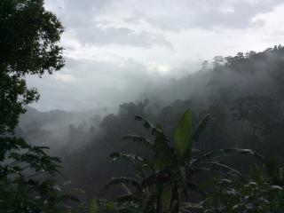 Eco Farmstay near Sinharaja Rainforest - Deniyaya vacation rentals