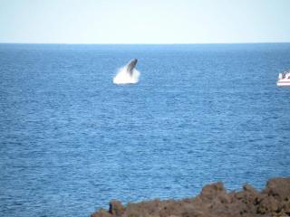$300 Summer Special July/Aug/Sept True Oceanfront - Waikoloa vacation rentals