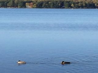 Belgrade Lakes Region Own Private Lake Front - Smithfield vacation rentals
