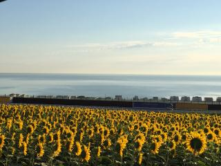 Casetta indipendente con giardino - Marina di Montemarciano vacation rentals