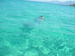 Location maison bor de mer, clim, 6 personnes - Borgo vacation rentals