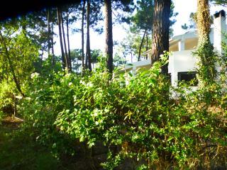 Beach, Golf and Blue House - Costa da Caparica vacation rentals