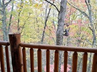 Perfect Cabin with Deck and A/C - Pigeon Forge vacation rentals