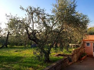 Appartamento in villa nella campagna romana - Lanuvio vacation rentals