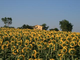 A spacious self-contained 2 bedroom apartment - Cingoli vacation rentals