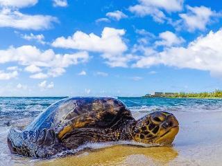 Luxurious Turtle Bay Golf Course Condo - Kahuku vacation rentals