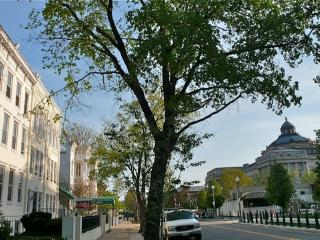 (2nd st #3c) Stunning Views Apt 1 block to Capitol - Washington DC vacation rentals