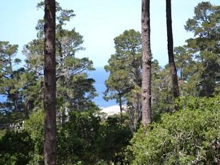 3702 Cypress by the Sea ~ Distant Ocean Views ~ Magical Setting! - Carmel vacation rentals