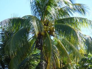 5BR Villa Lazarra - Miami Beach vacation rentals