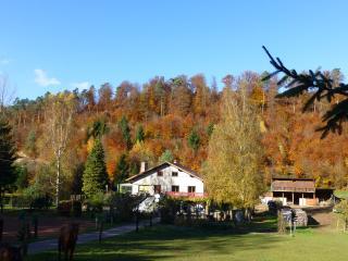 Gîte de la vallée en pleine forêt des vosges nord - Meisenthal vacation rentals