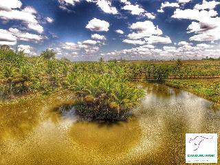 O jardim mais exótico do nordeste brasileiro - Arapiraca vacation rentals