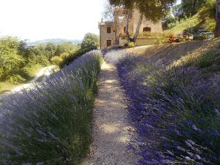 Spacious Villa in Umbrian Truffle Country - Fratticiola Selvatica vacation rentals