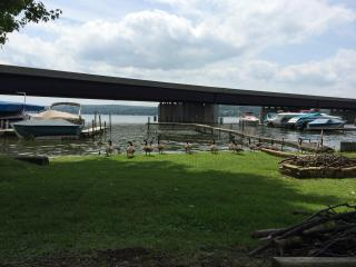 Eco- & Allergy Friendly Lakefront  w/Private Dock - Bemus Point vacation rentals