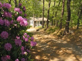 75 Cassick Valley Road 131364 - Wellfleet vacation rentals