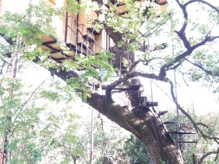 1 bedroom Tree house with Parking in Scario - Scario vacation rentals