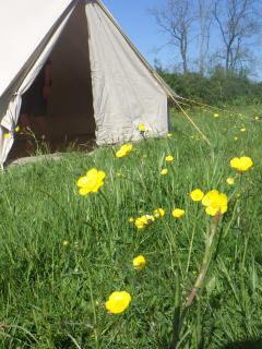 Nice Tented camp with Stove and Linens Provided - Uffculme vacation rentals