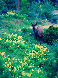 Enjoy Life on a Wildlife Preserve - Private or B&B - Boise vacation rentals