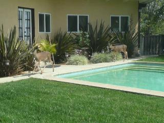 1 bedroom Guest house with Internet Access in Altadena - Altadena vacation rentals