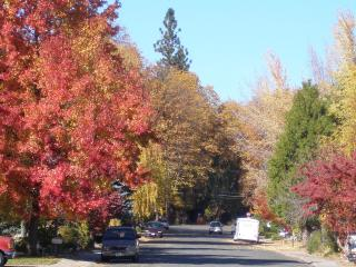 Cameron's Corner - Charming Condo near the Village - Mount Shasta vacation rentals