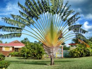 Charming 3 bedroom Deshaies House with Internet Access - Deshaies vacation rentals