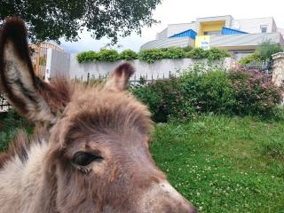 Apartment where cute donkeys are welcoming you! - Smrika vacation rentals