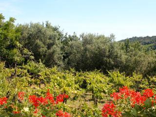 Casa Vacanze Fontechiaro immersa nel verde - Francavilla Al Mare vacation rentals