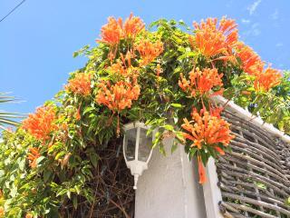 Casa Mandarina is waiting for you! - La Paz vacation rentals
