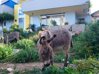 Spacious apartment with sea view and donkeys! - Smrika vacation rentals