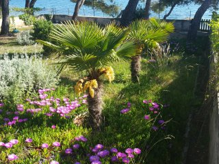 Apartments with huge garden, directly to the beach - Petrcane vacation rentals