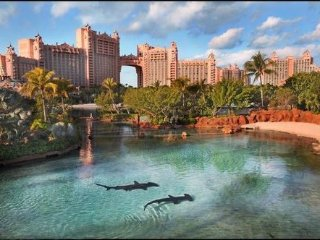Affordable 1 Bed /1 Bath, Steps Away from Atlantis - Paradise Island vacation rentals