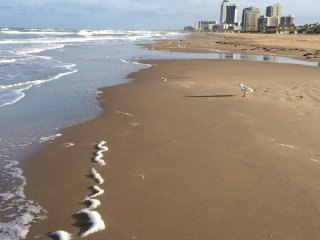 2 bedroom Condo with Internet Access in South Padre Island - South Padre Island vacation rentals