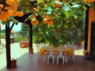 Villetta indipendente con vista panoramica - Nicolosi vacation rentals