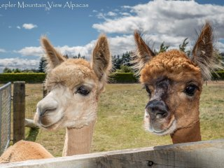 Alpaca Farmstay -  Kepler Mountain View Cottage, Manapouri, Fiordland - Manapouri vacation rentals
