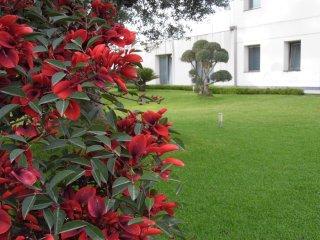 Nice Villa with Internet Access and A/C - Santa Venerina vacation rentals