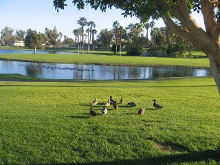 Oasis Townhome - 18th Fairway, Lake & Country Club - Palm Desert vacation rentals
