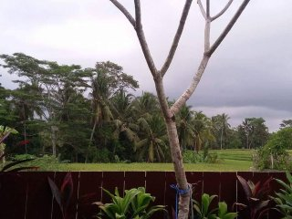 Dauh Villa Ubud a entire house with private pool.. - Ubud vacation rentals
