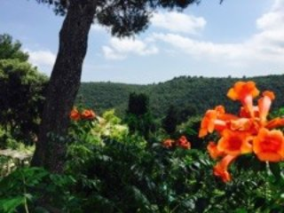 Little floral paradise on the French Riviera - Biot vacation rentals