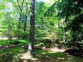 Woods Surrounding Pocono Lake Vacation Home - Pocono Lake vacation rentals