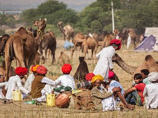 Pushkar Camel fair tour 2016 - New Delhi vacation rentals