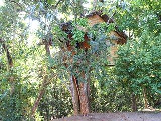 Beautiful 1 bedroom Tree house in Midigama with Balcony - Midigama vacation rentals