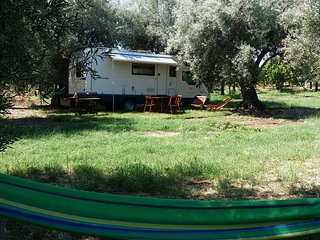 Autocaravan in olive tree grove - Noto vacation rentals