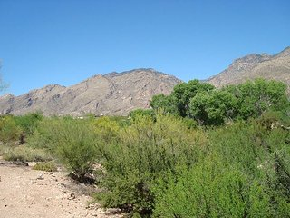 2nd floor 1 bedrm/den with a private patio and Breath taking Moutain Views! - Tucson vacation rentals