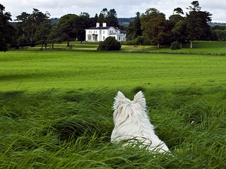 Luxury Manor/ Private Estate/ Stunning Views 7 Bedrooms 8 Bathrooms Day tours - Killarney vacation rentals