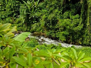 Wainaku Villa Overlooking Pukihae Stream in Hilo - Hilo vacation rentals