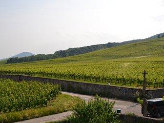 Au coeur du vignoble alsacien à Dambach-la-Ville - Selestat vacation rentals