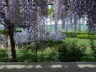Località Passonovo, villa in Orvieto - Orvieto vacation rentals
