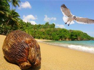LUXURY RENTALS~ Coconut Plantation House - Naples vacation rentals