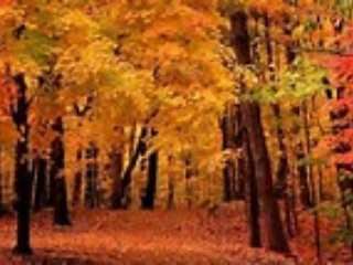 YOUR FALL COLOR WEEK, roomy/kitchenette-last cut - Boyne Falls vacation rentals