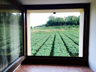 Relax in the vineyards near Verona and Vicenza - Illasi vacation rentals